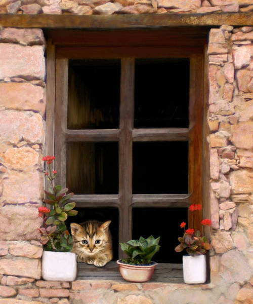 Digital Art - Tuscan Kitten In The Window by Bob Nolin