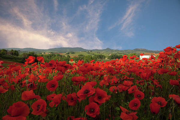 Photograph - Tuscan Poppy Field by Susan Rovira