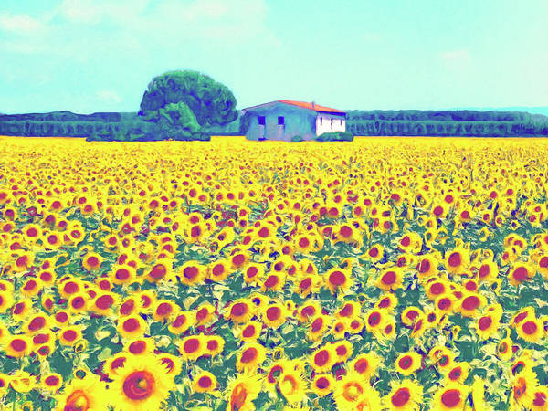 Painting - Tuscany Sunflower Farm by Dominic Piperata