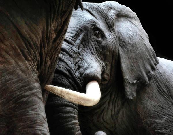 Photograph - Elephants Field Museum by Coleman Mattingly