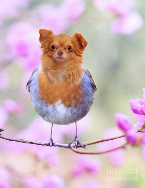 Photograph - Tweetie Dog by Juli Scalzi