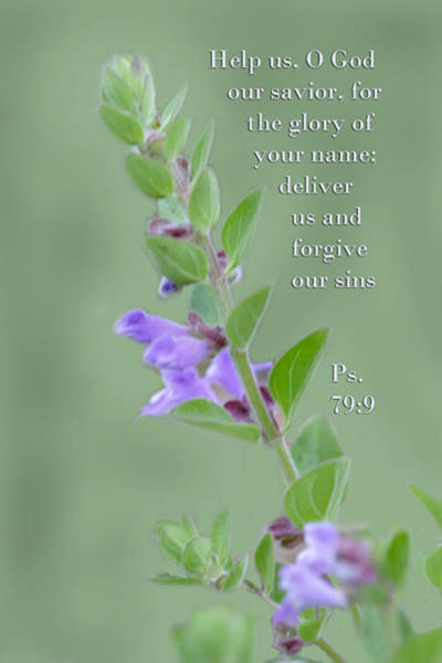 Bible Quotes Photograph - Twig With Lavender Blossoms Palms 79 Verse 9 by Linda Phelps