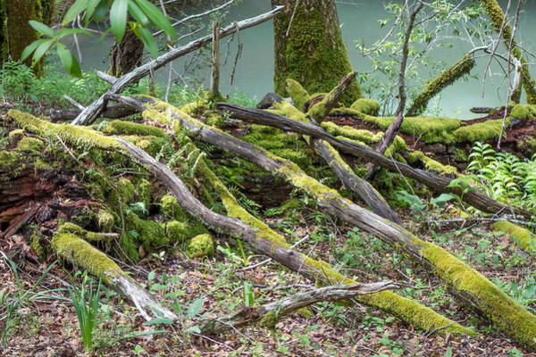 Photograph - Twigs And Moss by Peter Dyke