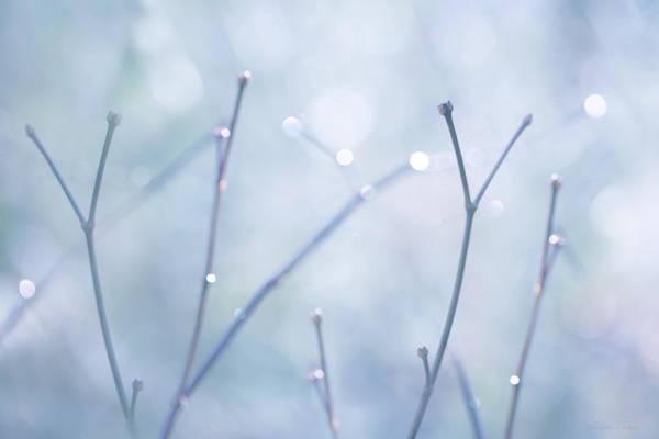 Wall Art - Photograph - Twigs Blue by Jennie Marie Schell