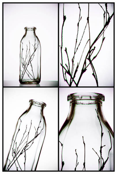 Bottles Photograph - Twigs - Four Panel by Tom Mc Nemar