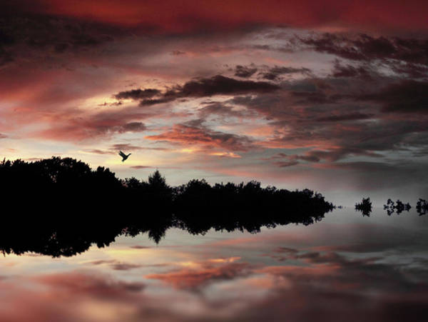 Photograph - Twilight Flight by Jessica Jenney