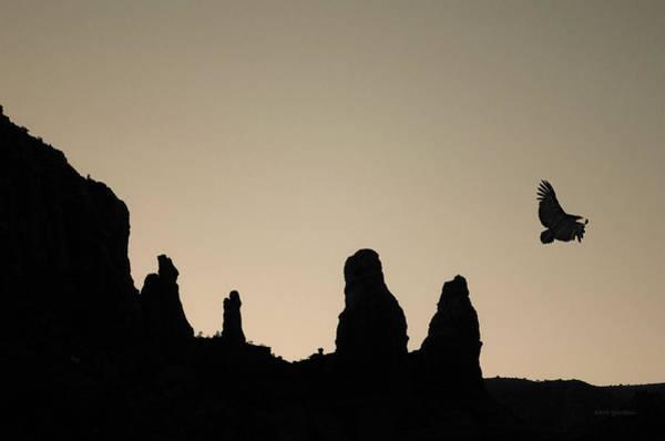 Photograph - Twilight Flight Toned by David Gordon