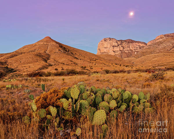 Photograph - Twilight Glow Of The Chihuahua Desert At Guadalupe Mountains National Park - West Texas by Silvio Ligutti