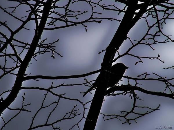 Photograph - Twilight by Lauren Radke