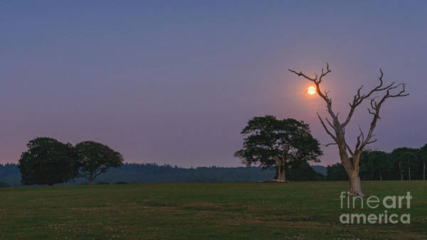 Wall Art - Photograph - Twilight Moon New Forest by Richard Thomas
