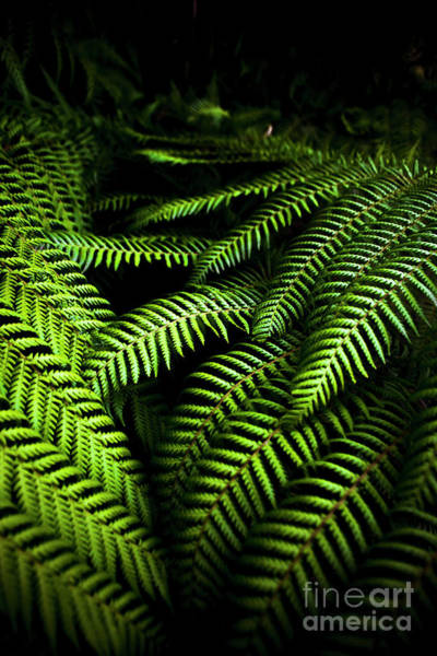 Dark Green Wall Art - Photograph - Twilight Rainforest Fern  by Jorgo Photography - Wall Art Gallery