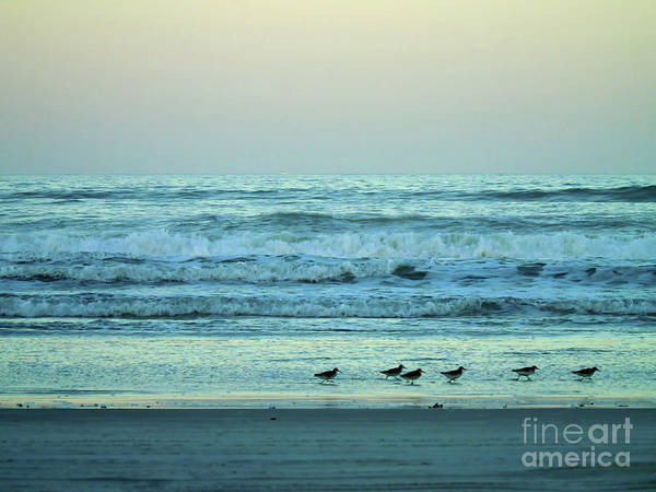 Photograph - Twilight Sandpipers by D Hackett