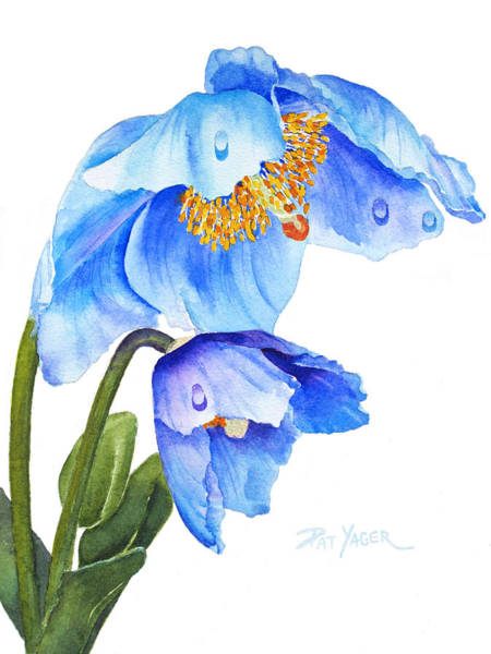Wall Art - Painting - Twin  Blue Poppies by Pat Yager