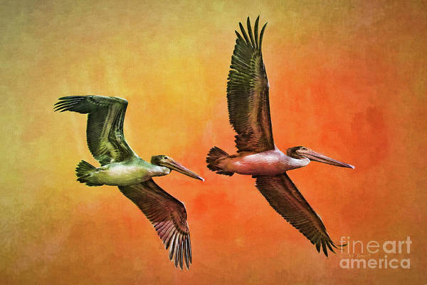 Painting - Twin Flight by Deborah Benoit