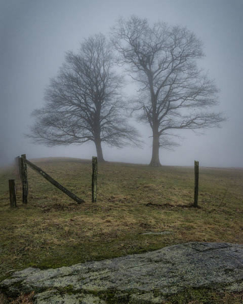 Twin Trees Late Fall Foggy Morning Art Print