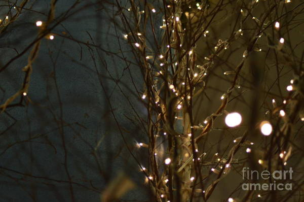 Visual Language Photograph - Twinkling Branches by Des Brownlie