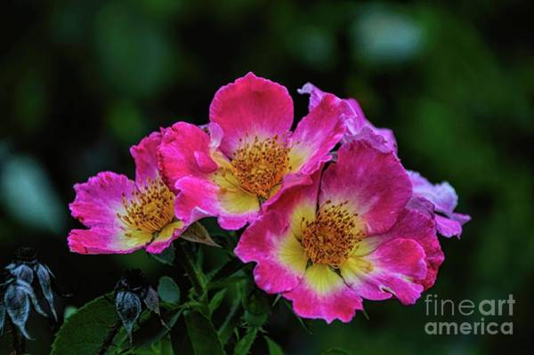 Photograph - Twins In Pink And White by Diana Mary Sharpton