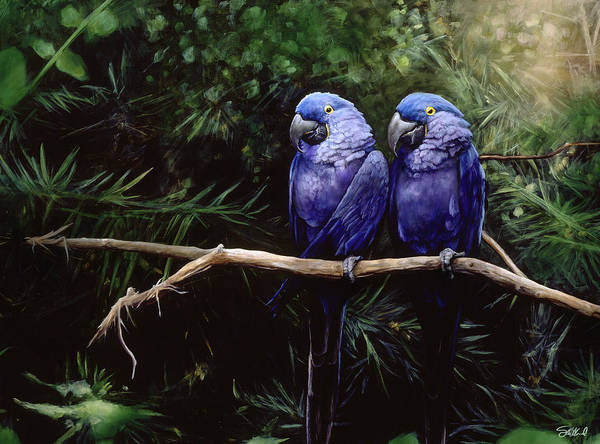 Parrot Painting - Twins by Steve Goad
