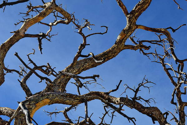 Wall Art - Photograph - Twisted Branches - Natural Abstract by Glenn McCarthy Art and Photography