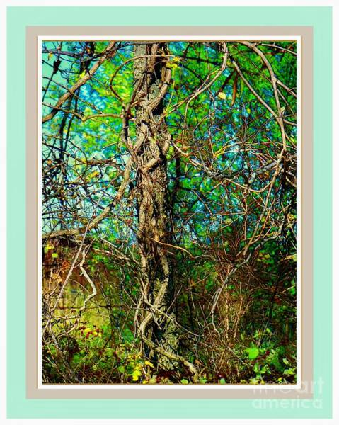 Wall Art - Photograph - Twisted Branches by Shirley Moravec