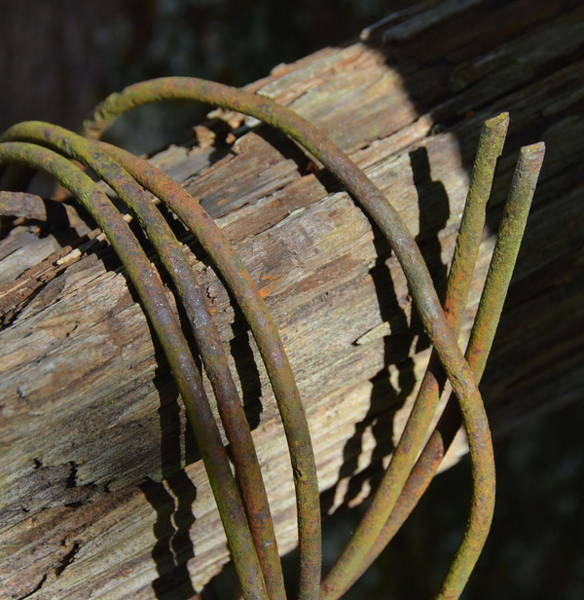 Wire Wrap Photograph - Twisted by Carla Parris
