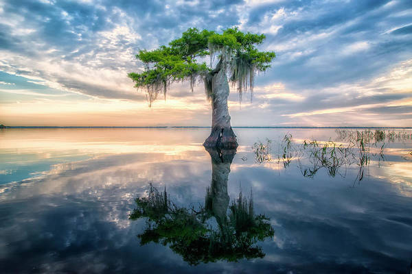 Photograph - Twisted Cypress Mirror by Ghostwinds Photography