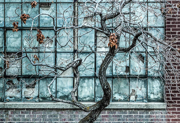 Photograph - Twisted Decay - Abstract Metaphor  by Steven Milner