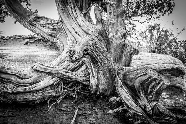 Photograph - Twisted by Marilyn Hunt