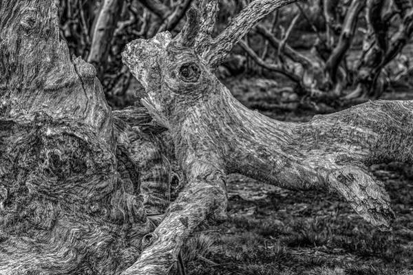 Photograph - Twisted by Mark Lucey