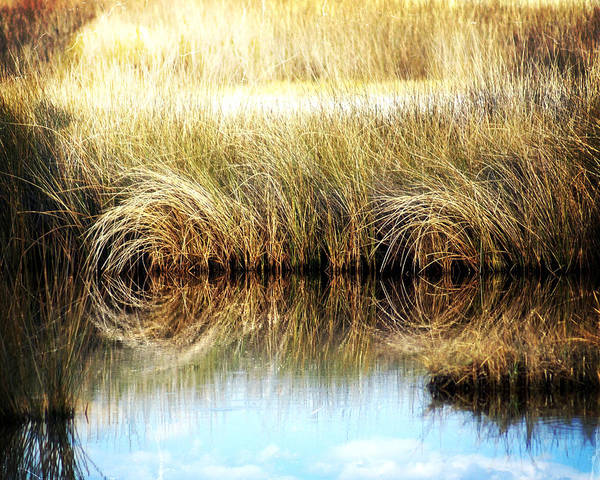 Photograph - Twisted Reeds by Marty Koch