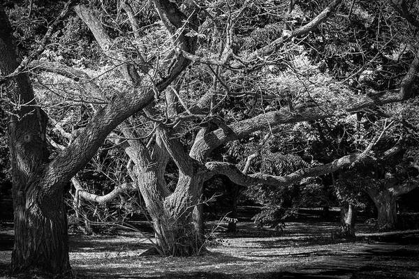 Photograph - Twisted by Robert Mitchell