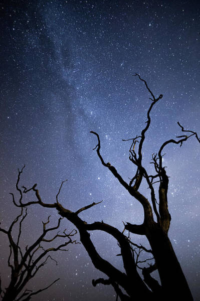 Reach For The Sky Wall Art - Photograph - Twisted Spooky Trees And The Milky Way Stars by Anita Nicholson