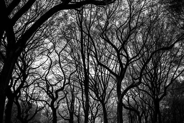 Photograph - Twisted Trees by Robert J Caputo