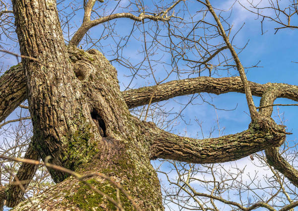 Photograph - Twisted Trunk by Keith Smith