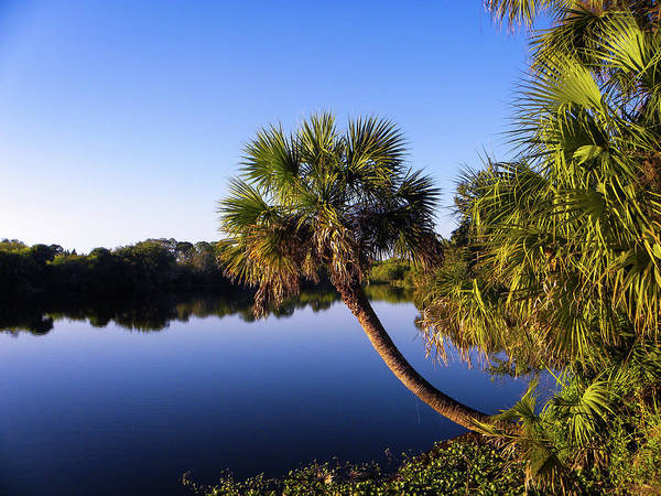 Florida Wall Art - Photograph - Twists Its Way by Ric Schafer