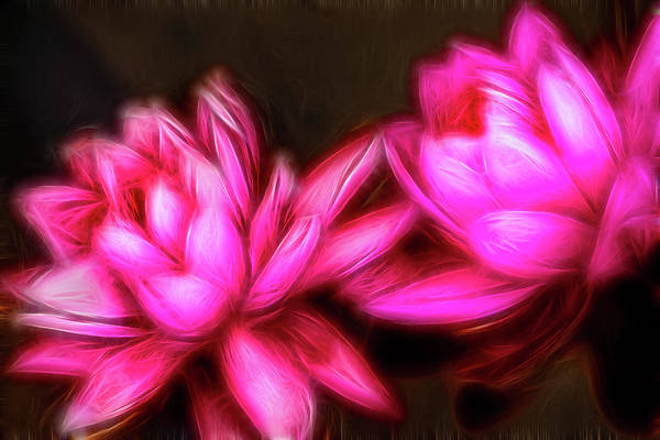 Photograph - Two Artistic Water Lilies by Don Johnson