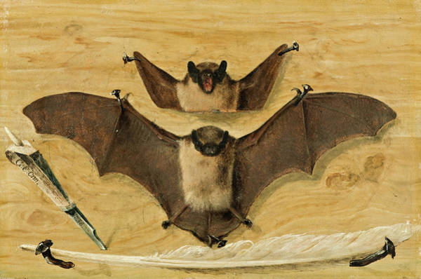 Wall Paper Painting - Two Bats Nailed To A Timber Wall, Knife And Quill Pen by Gabriel Orm