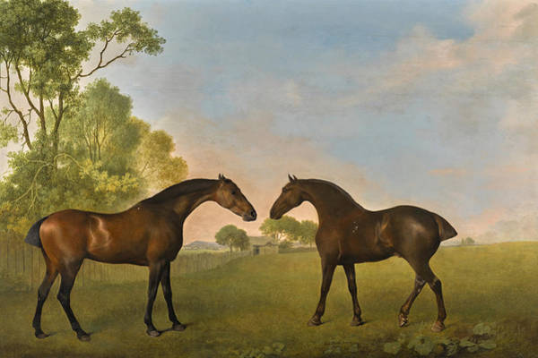 Wall Art - Painting - Two Bay Hunters In A Paddock by George Stubbs