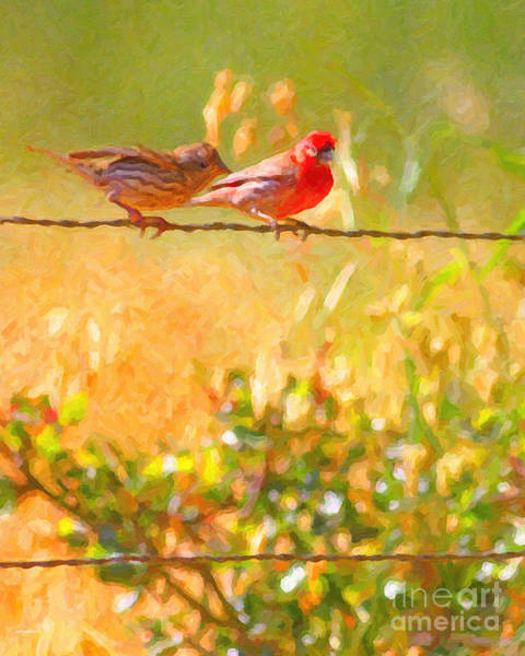 House Finch Photograph - Two Birds On A Wire by Wingsdomain Art and Photography