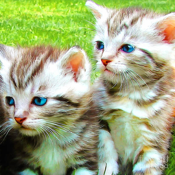 Photograph - Two Blue Eye Kittens Painterly 20170916 Square by Wingsdomain Art and Photography