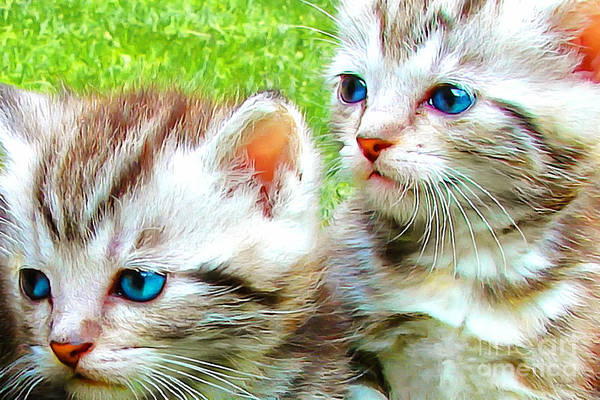Photograph - Two Blue Eye Kittens Painterly 20170916 V2 by Wingsdomain Art and Photography