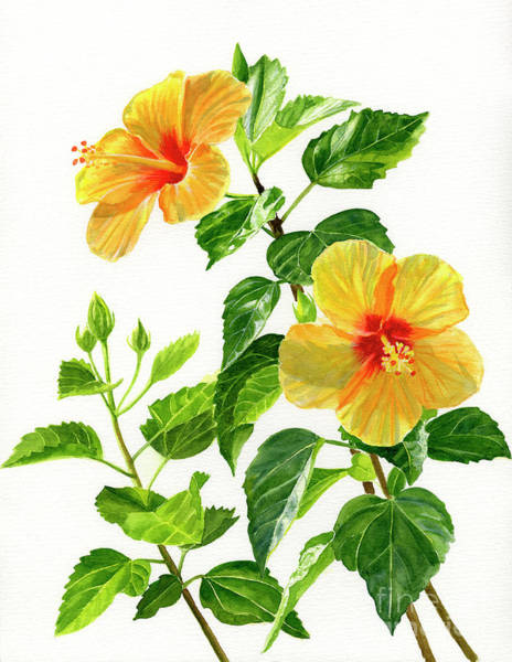 Wall Art - Painting - Two Bright Yellow Hibiscus Blossoms by Sharon Freeman