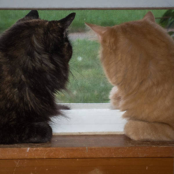 Photograph - Two Cats In A Window by Guy Whiteley