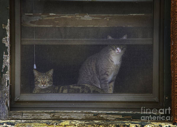 Photograph - Two Cats Of New Ulm by Craig J Satterlee