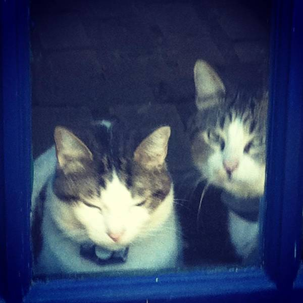 Photograph - Two Cats On Baylor St. by Cherylene Henderson