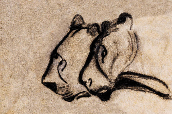 Handmade Wall Art - Painting - Two Chauvet Cave Lions - Clear Version by Weston Westmoreland