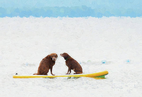 Digital Art - Two Chocolate Retrievers On A Paddle Board by Les Palenik