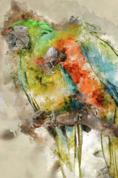 Painting - Two Colorful Macaws Digital Watercolor On Photograph by Brandon Bourdages