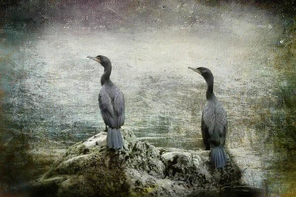 Photograph - Two Cormorants by Belinda Greb