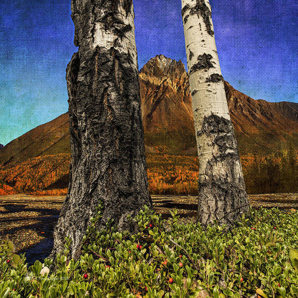 Photograph - Two Cottonwood Trees And Kinnikinnik by Fred Denner